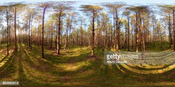 360 VR Landscapes of Latvian pine tree forests at the beach in a sunny evening