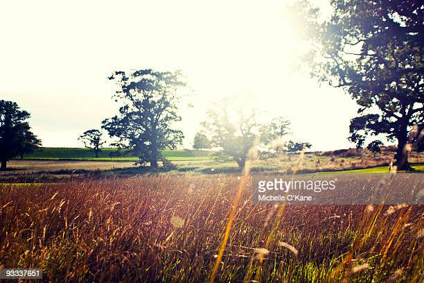 Landscapes of nature
