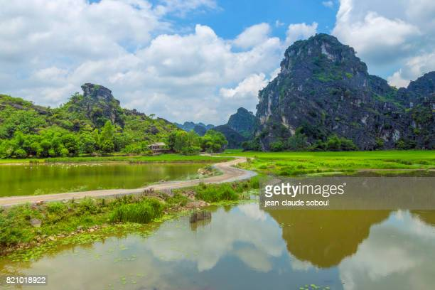 Landscapes of the karstic peaks, in the middle of the rice fields( Vietnam)