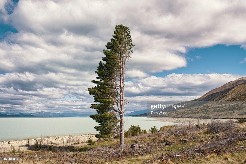 NZ Landscapes : Stock Photo