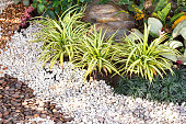 Landscaping combinations of plant and grass.