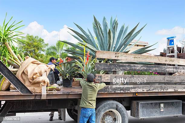 Landscaping truck with Agave and tropical plants