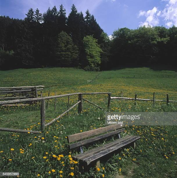 Holzbank in einer Frühlingswiese 2000