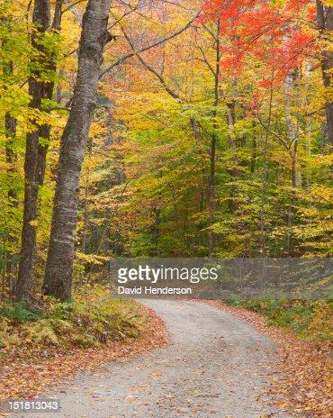 Lane through autumn woods : Stock Photo