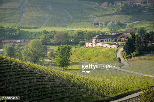 Langhe のブドウ栽培温室とブドウ園の春