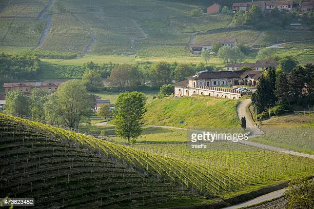 Langhe's vineyard in Spring with Vinery