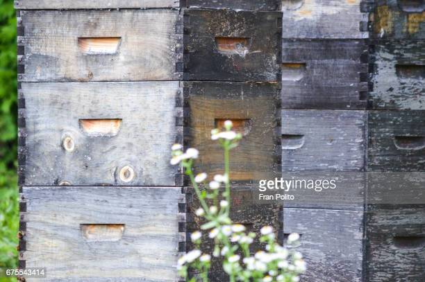 Langstroth beehives on pallets.