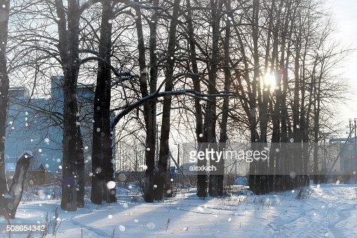 lanscape alley tree winter : Stock Photo
