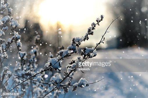 lanscape snow grass macro tree winter : Stock Photo