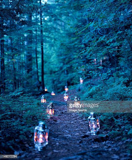 Lanterns marking a path through the woods