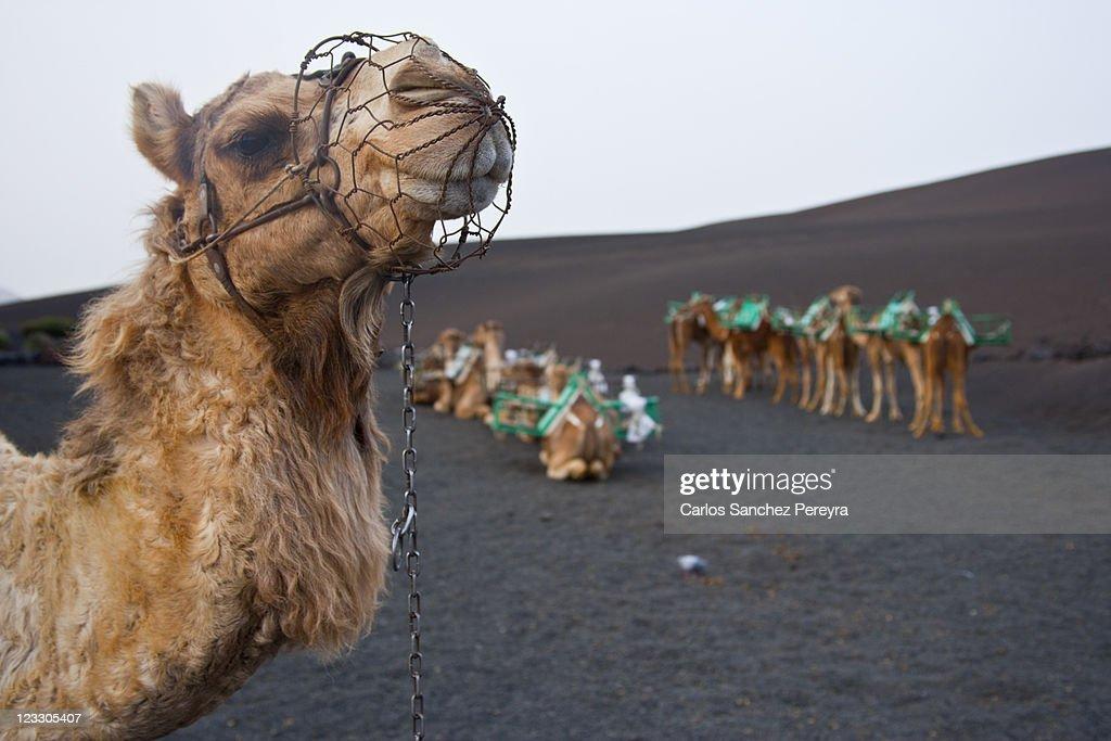 Lanzarote, Canary Islands : Stock Photo