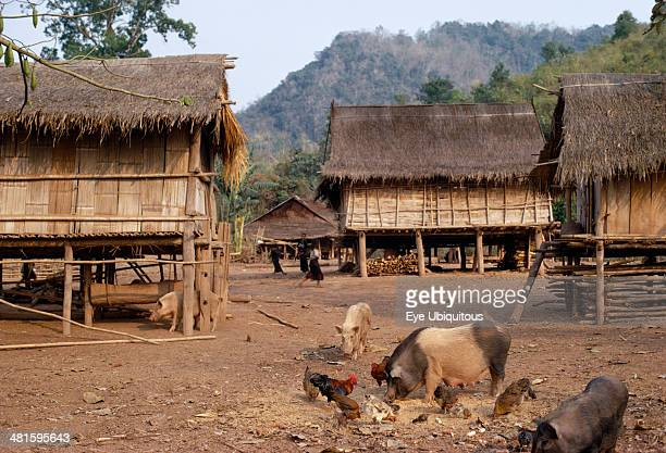 Laos Tribal People Meo Tribe Meo village with children playing between thatched roof homes built on stilts Livestock with pigs and chickens feeding...