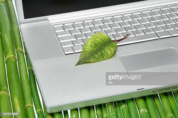 Laptop keyboard, leaf and bamboo