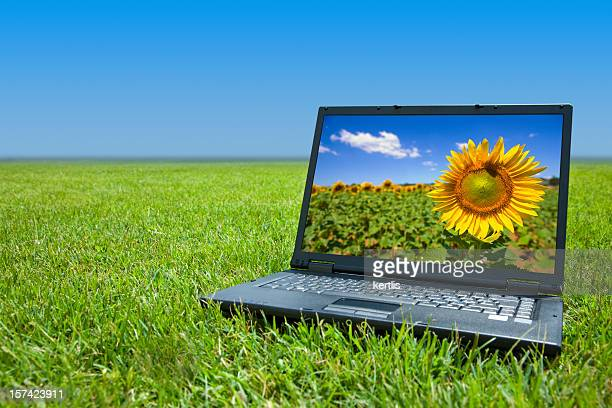 Laptop with sunflower background sitting in field of grass