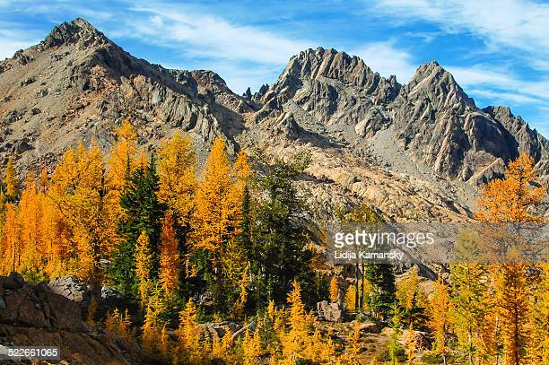 Larches and Mountains