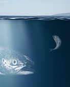 Large and Small Fish Underwater