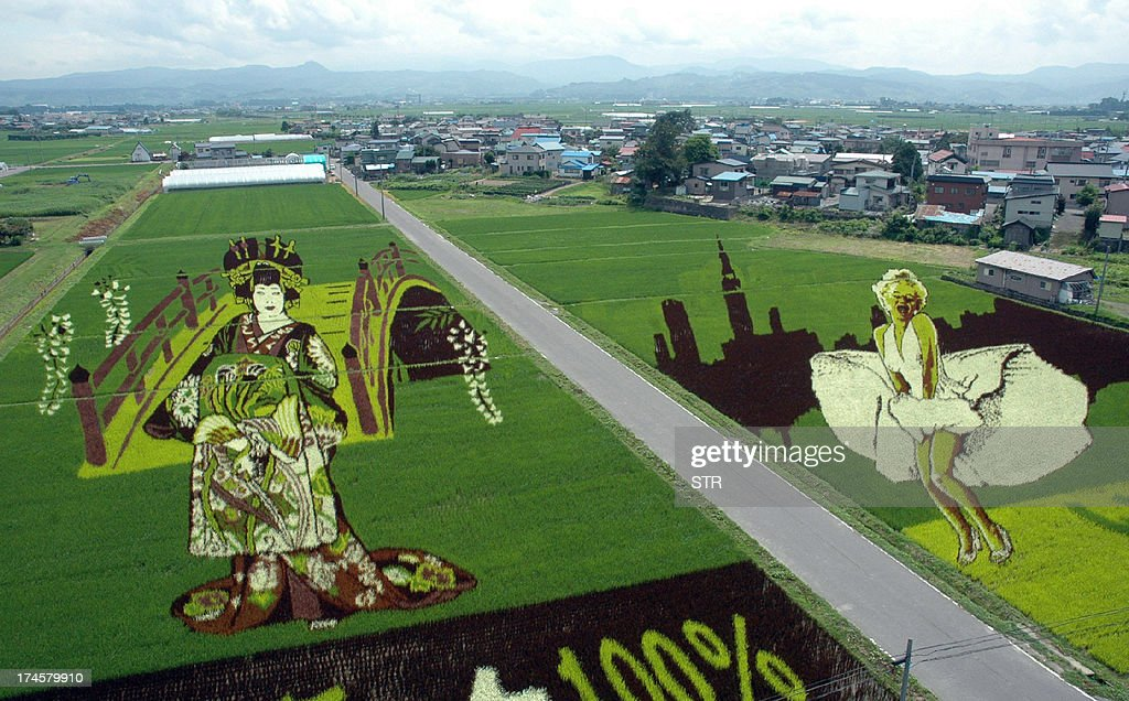 A large artwork of an 'oiran' (L), a high class courtesan of the Edo era and a depiction of US actress Marilyn Monroe (R) in her film 'The Seven Year Itch', is displayed on a rice field as part of a summer attraction at Inakadate village in Aomori prefecture, northern Japan on July 27, 2013. The huge rice paddy art, created by using nine different coloured varieties of rice plants, can be viewed from an observation platform in the village office until October.