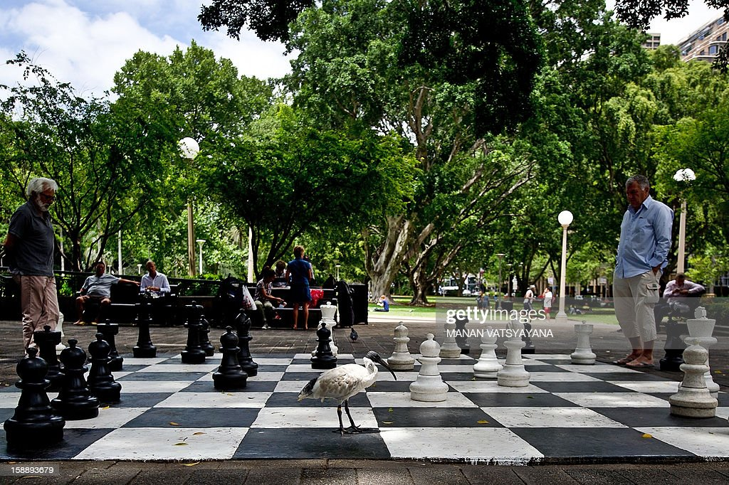 A large bird (C) walks across a giant chessboard as residents try to resume their game in Sydney's Hyde Park on January 3, 2013. Spread over 40 acres in Sydney's central business district, Hyde Park is the oldest public parkland in Australia.
