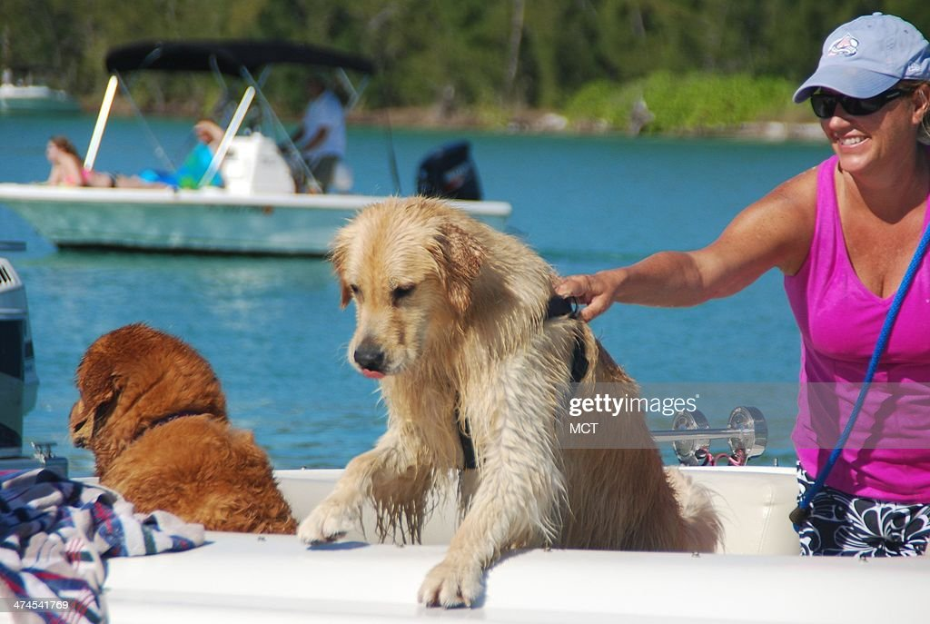 Large breed dogs can be included in family activities along Floridas Paradise Coast.