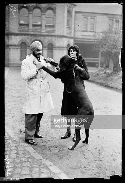 Large dog greets a vet outside the Royal Veterinary College London 1932 A photograph of a large dog leaping up to put his paws on a trainee vet's...