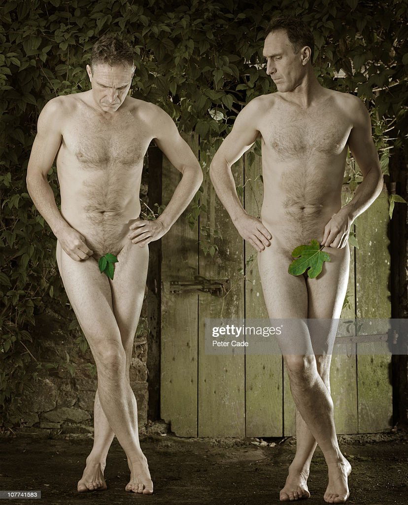 large figleaf vs small figleaf : Stock Photo