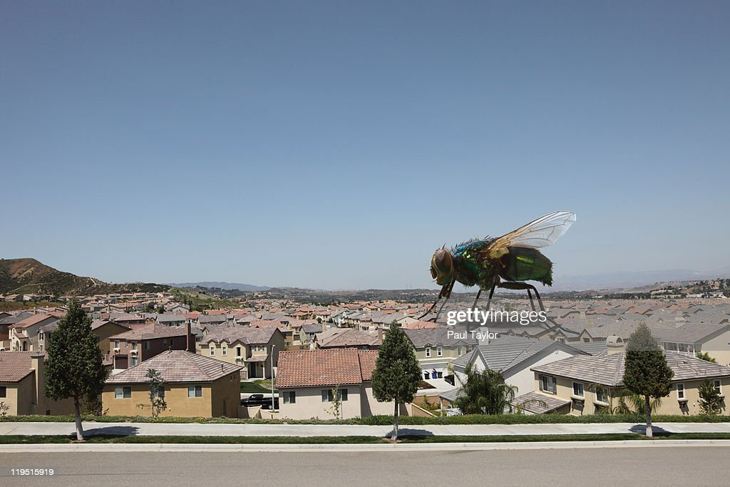 Large Fly on Houses : Stock Photo