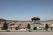 Large Fly on Houses