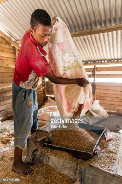 A large for Madagascar standards rice mill uses 2 different machines to remove both the hard outer husk and softer silver skin from red rice grains