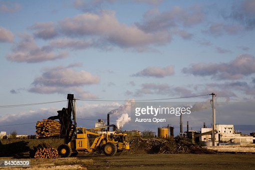 A large fork carries an entire truckload of logs. : Stock Photo