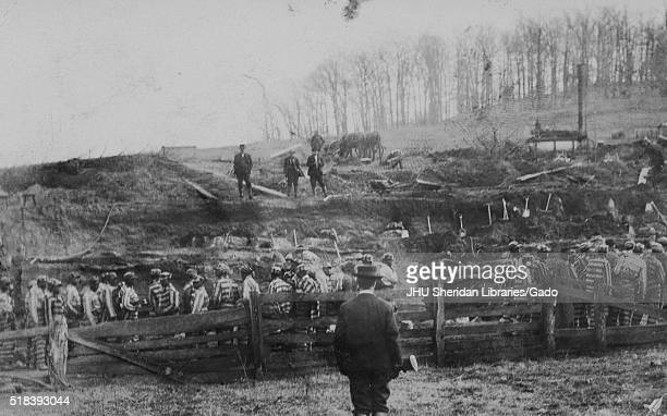 A large group of African American male laborers in striped prison uniforms stand in a cleared wooded area among mounds of dirt and shovels with...