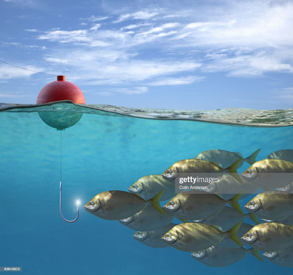 large group of fish attracted to shiny hook
