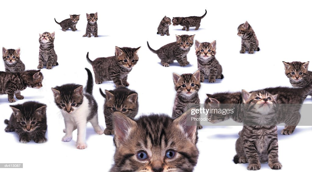Large group of kittens