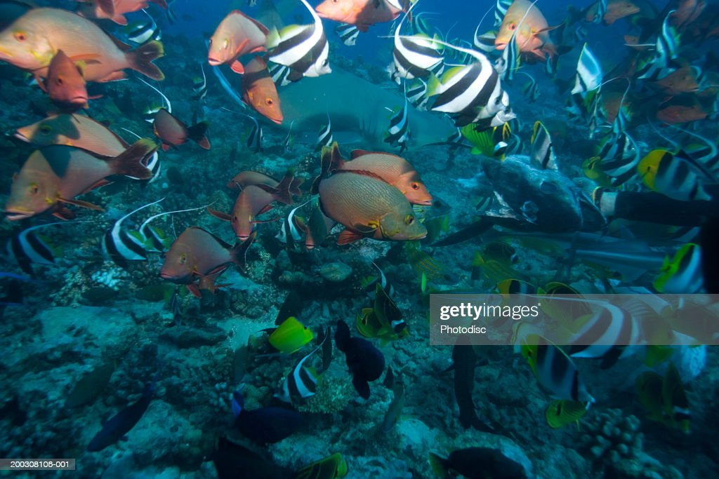Large group of tropical fish underwater : Stock Photo