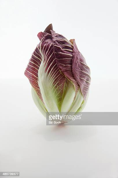 Large head of radicchio on white