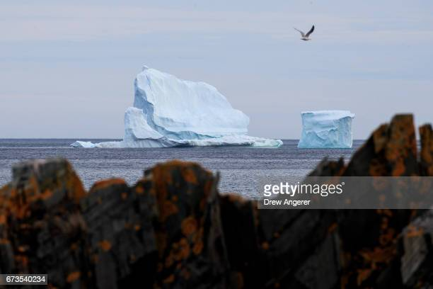 A large iceberg floats in the Atlantic Ocean April 26 2017 off the coast of Ferryland Newfoundland Canada Icebergs break off from Baffin Island and...
