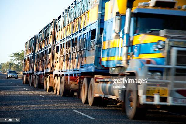 Large long Cattle Truck or Lorry driving on the road