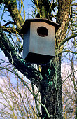 Large nestbox in tree for tawny owl to nest in forest
