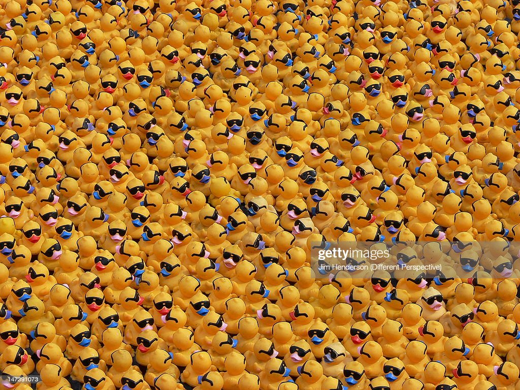 Large number of ducks : Stock Photo