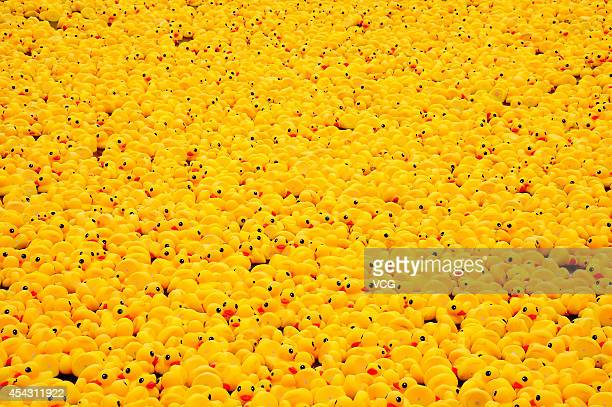 A large number of yellow rubber ducks float on Tianshi lake of Suzhou Amusement Land on August 28 2014 in Suzhou Jiangsu province of China 4...