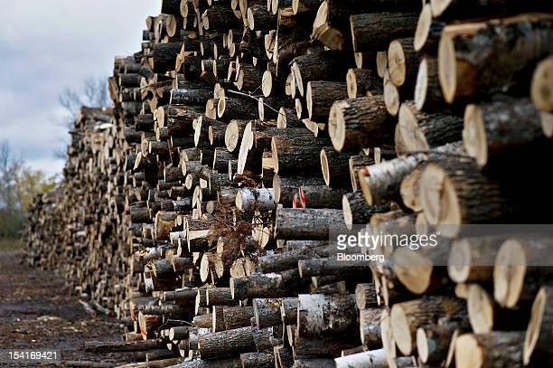 A large pile of unprocessed logs sits outside the Nicolet Hardwoods Corp lumber mill in Laona Wisconsin US on Wednesday Oct 10 2012 Nicolet Hardwoods...