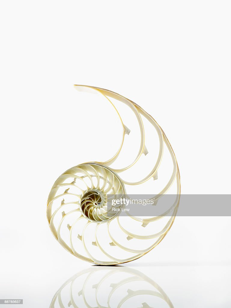 large shell skeleton on a white reflective surface : Stock Photo