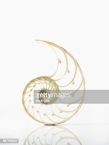 large shell skeleton on a white reflective surface : ストックフォト