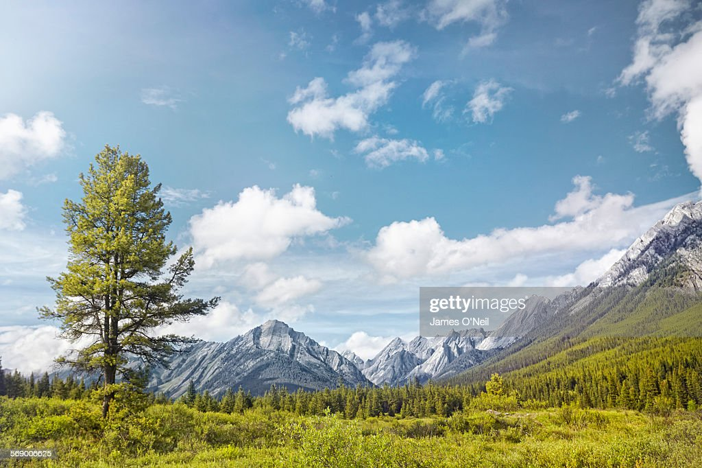 large tree in open mountain fields