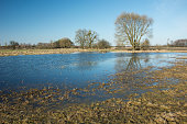 A large tree in the water on a flooded meadow after rain and blue sky