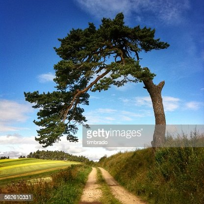 Large tree leaning over a road, Le Puy-en-Velay, France