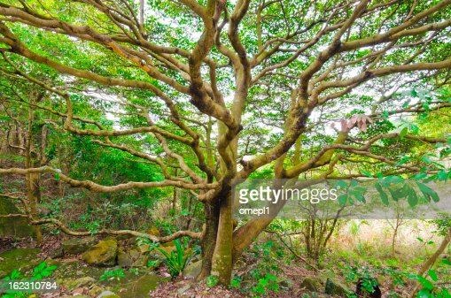 Large Tree : Stock Photo