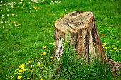 Forest, Land, Planet Earth, Season, Springtime