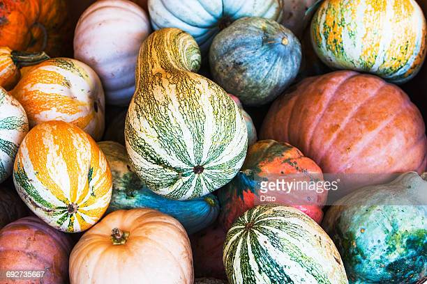 Large variety of colorful gourd, squash vegetables on stall