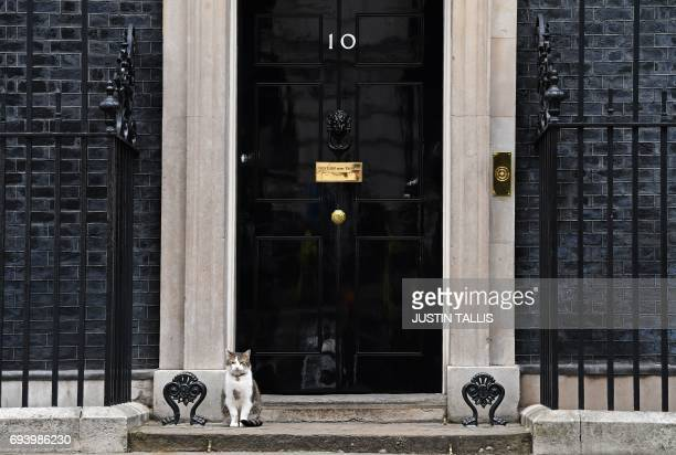 Larry the 10 Downing Street cat is seen outside the door of 10 Downing Street in central London on June 9 2017 as results from a snap general...