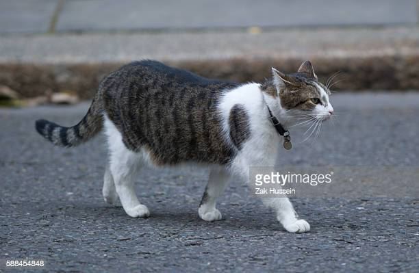 Larry the 10 Downing Street cat outside 10 Downing Street in London